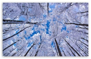 looking_up_through_trees_winter-t2